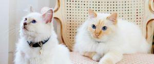 lbp_1920_1080_le_bristol_cats_fa_raon_kleopatre_together