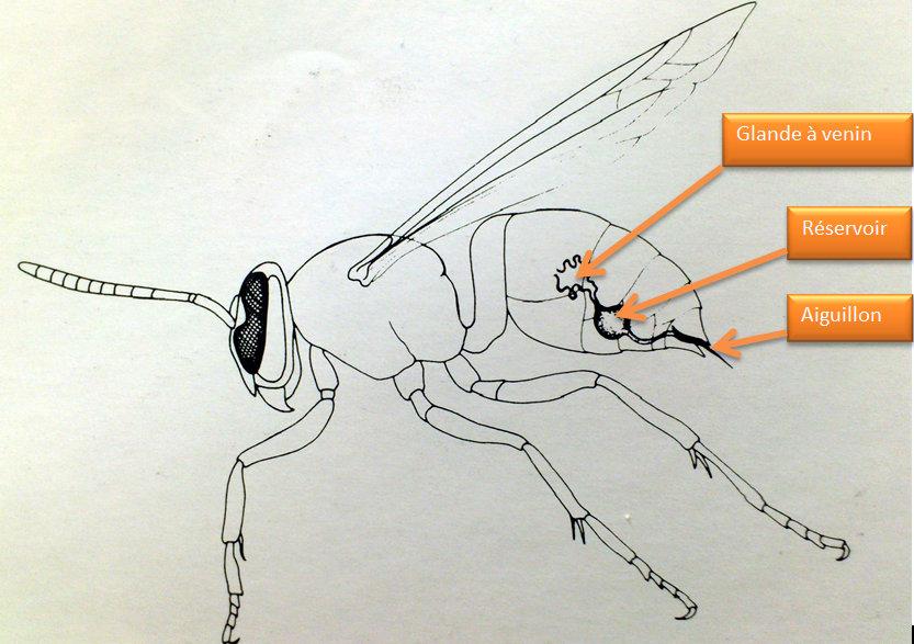 appareil abeille